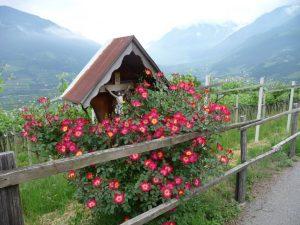 Kreuzweg in den Alpen